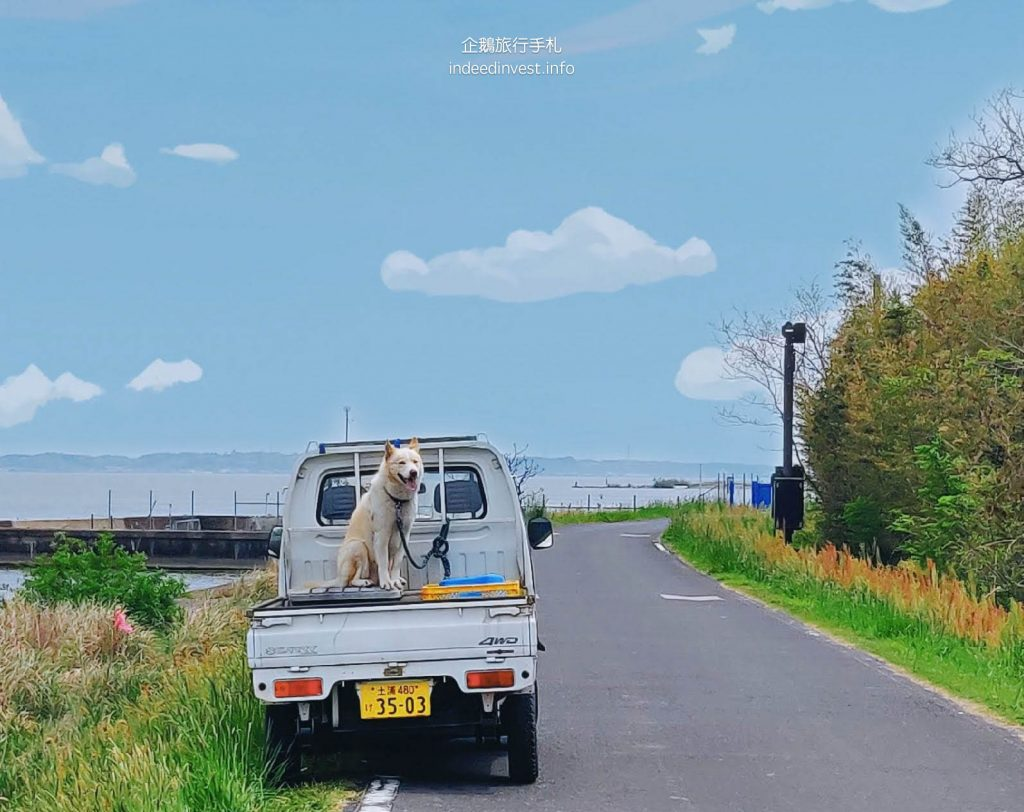 smile-dog-on-car