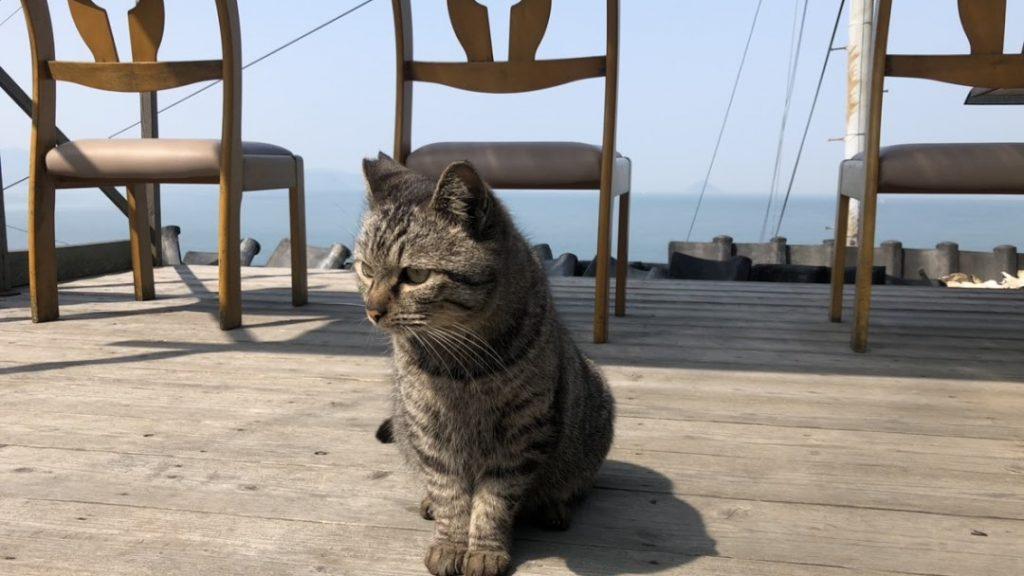 cat-ogi-island