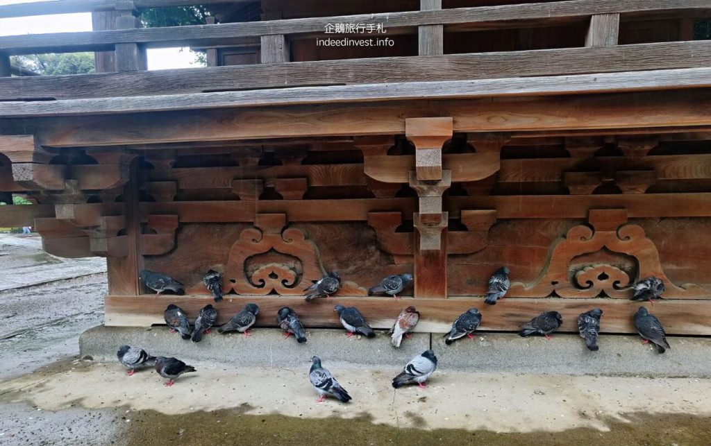 pigeon-in-temple