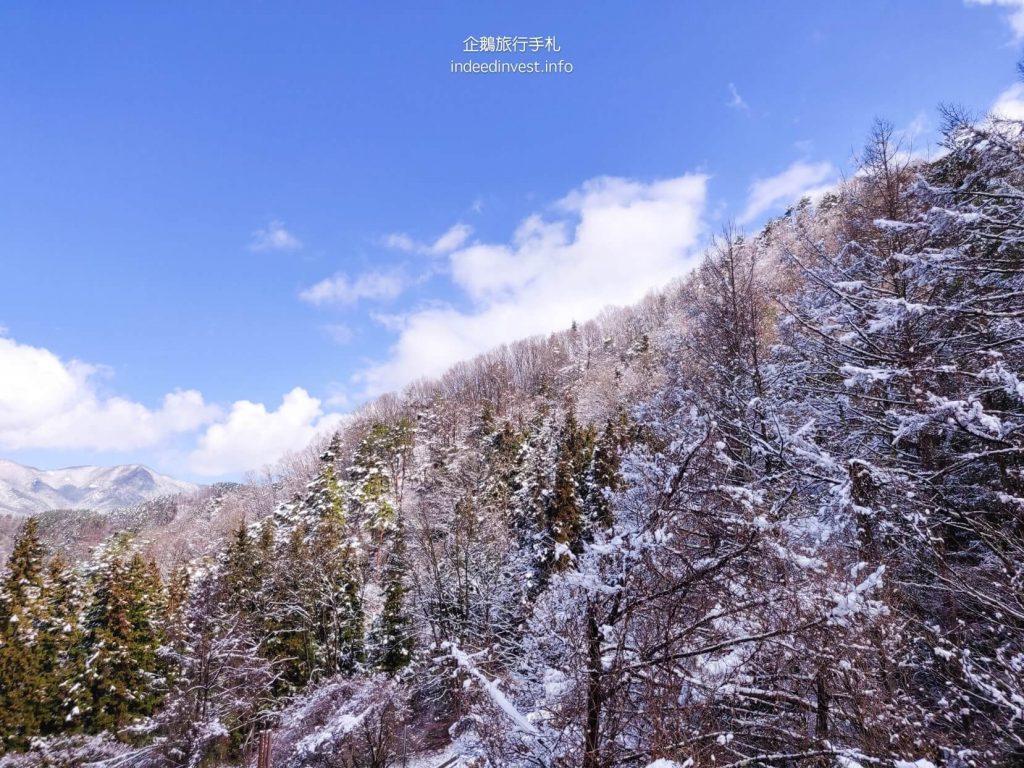tree-with-snow-kawaguchi-lake-cable-car