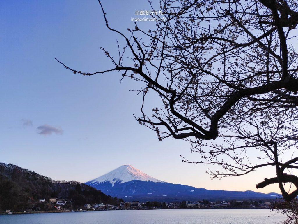 tree-fuji-mountain