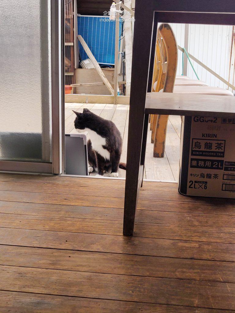 cat-sunset-cat-home-ogi-island