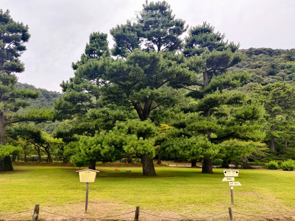 pine-ritsurin-garden