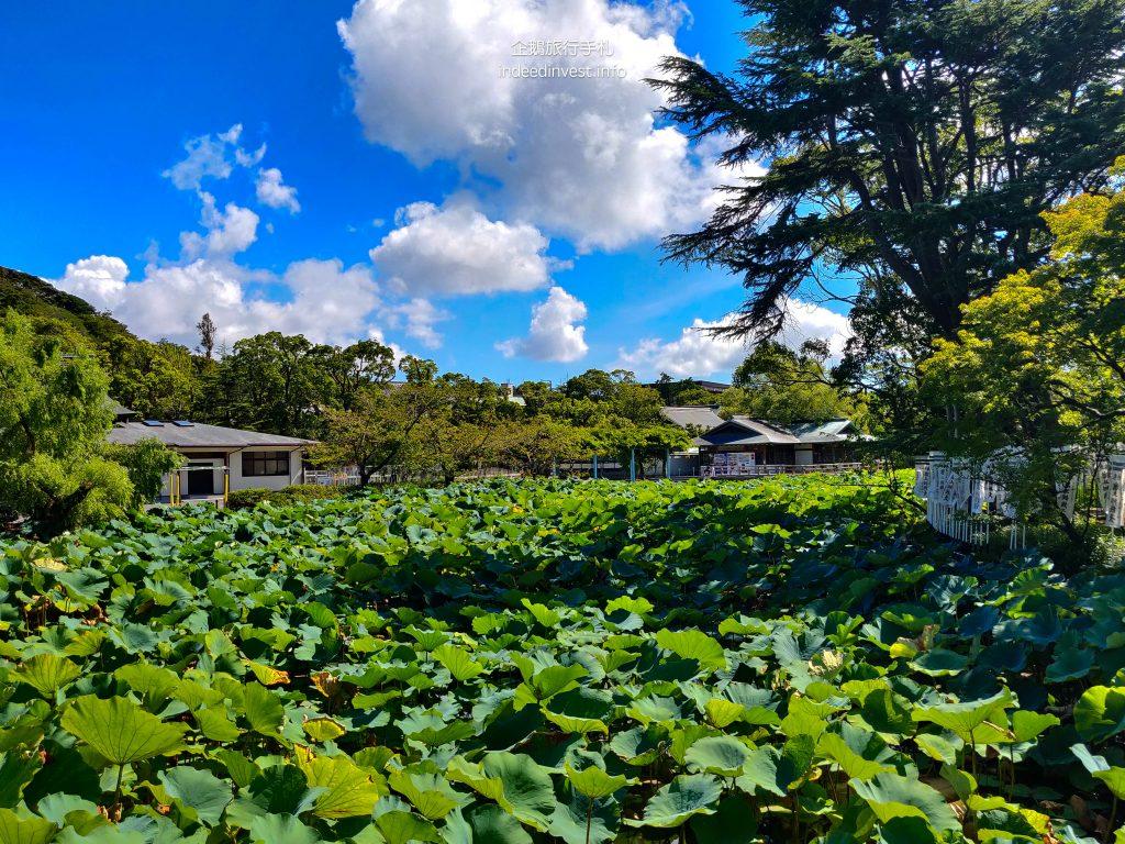 pond-tsurugaoka-hachimangu-shrine